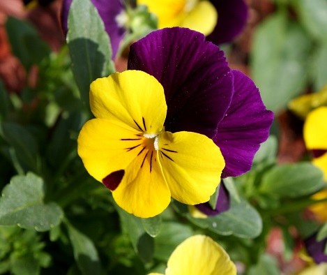 Gardening: what to plant in April